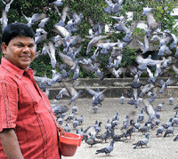 Pigeon feeding in India