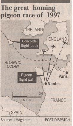 Pigeon race 1997