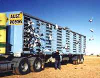Pigeon Transporter