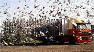 Pigeon transporter and release