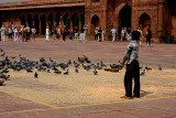Pigeons being fed at temple