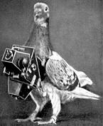 World War 2 pigeon with camera