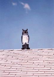 Replica Plastic Owl Bird Scarer