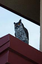 Buy Fake Plastic Owl Bird Deterrent Replica Owl Decoys