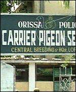 Orissa Police carrier pigeon station
