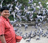 Pigeon feeding in India