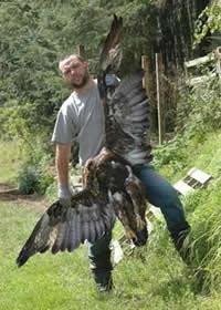 Poisoned Golden Eagle
