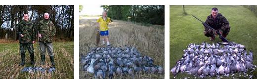 Wood pigeon shooting